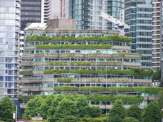 Green rooftops in Vancouver, British Columbia