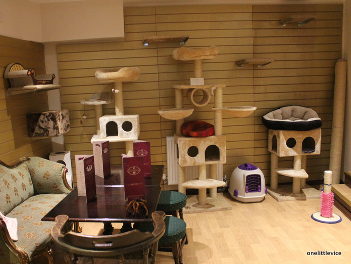 The Cat Café - A Perfect Forever Home or Hellish Nightmare?