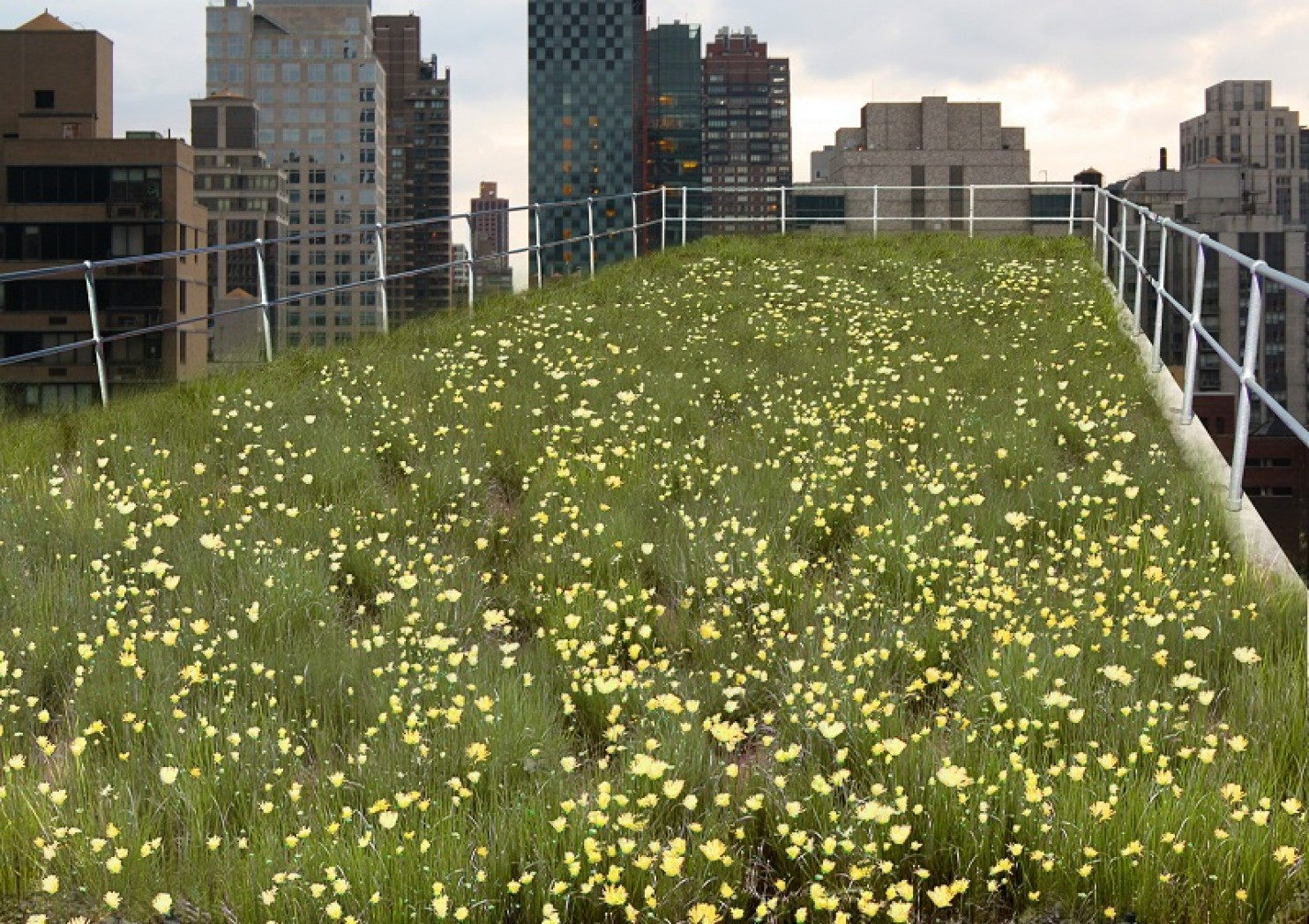 "The green roof view that half of research subjects observed during their ""micro-break."" (University of Melbourne) IMAGE BY Washington Post"