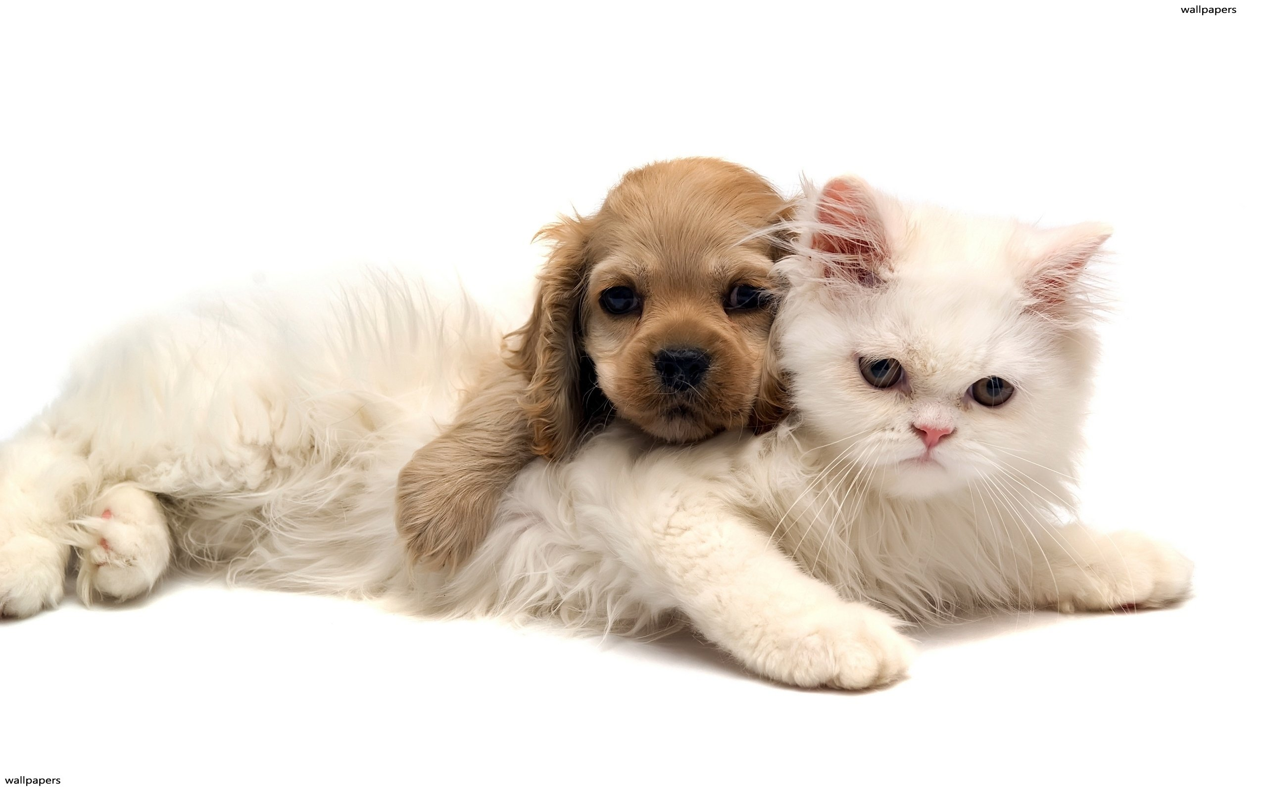 Non-Human Animals & Dementia